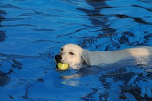 Dogs cause algae growth in pools