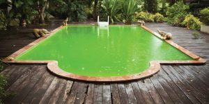 what is biofilm in pools
