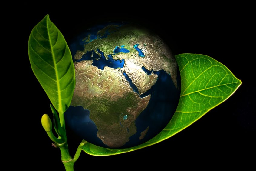 Seven Steps to Implementing a Green Business Strategy
