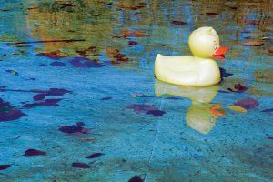 phosphates and algae in swimming pools