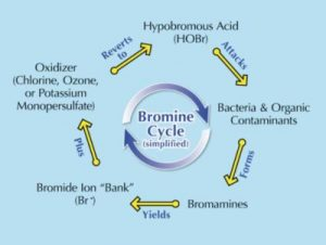 Figure 1: The bromine cycle.