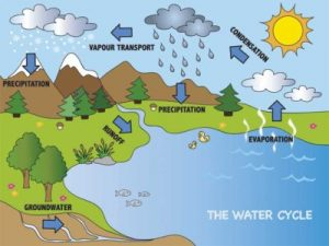 The water cycle is a continuous loop of how it transforms and renews itself.