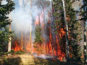 Testing and treating pools for phosphates could be paramount immediately following forest fires.